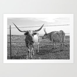 Longhorn Cows Art Print