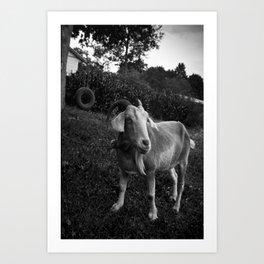 Noddy the Goat Art Print