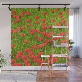 tulips field Wall Mural