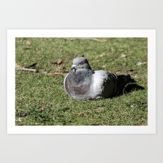Lone Roosting Art Print
