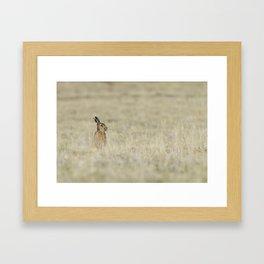 Brown hare Framed Art Print