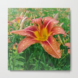 Daylilies After Rain Metal Print