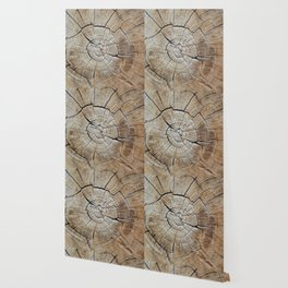 Tree rings of time Wallpaper