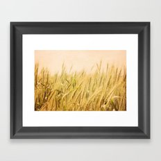 Wild Wheat Framed Art Print