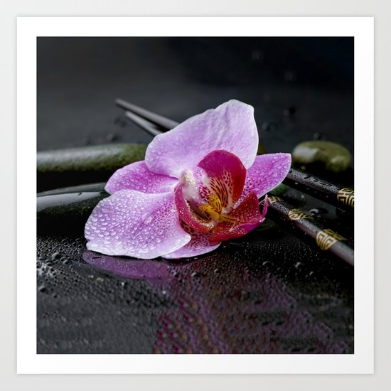 Pink orchid zen black still life Asia Art Print