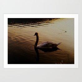 The Sundown Swan Art Print