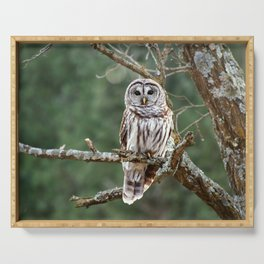 Barred Hoot Owl Serving Tray