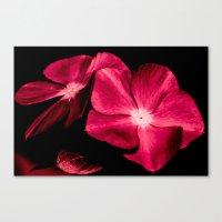 ruby Canvas Prints featuring Ruby by Loredana