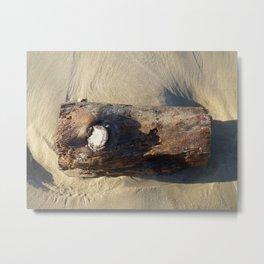 Beached Wood Metal Print