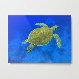 Wildlife: Green Turtle III Metal Print