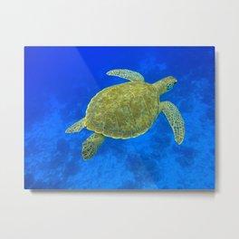 Wildlife: Green Turtle III Metal Print