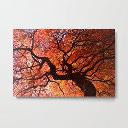 Ephemeral - Fall Maple Leaves, Nature Photography Metal Print
