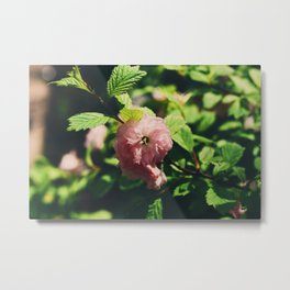 Cherry Bloom Metal Print