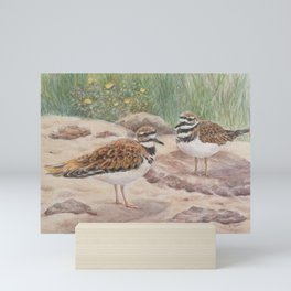 Killdeer at Monterey Bay Aquarium Aviary Mini Art Print