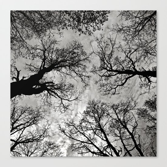 Meditative Power of Trees Canvas Print