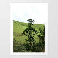 Araucaria Art Print