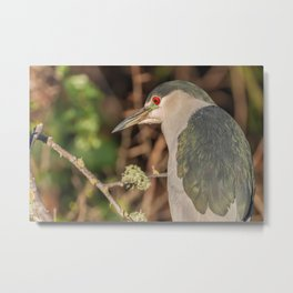 Night Heron Metal Print