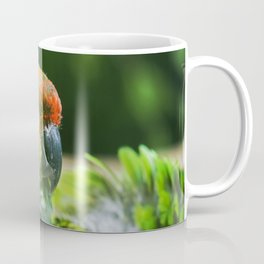 Nanday Parakeet Coffee Mug