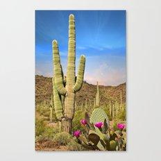 Saguaro Cactus Landscape in Arizona Desert Canvas Print