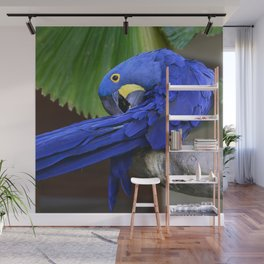 A Hyacinth Macaw Preening Its Feathers Wall Mural
