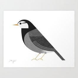 White-cheeked starling Art Print