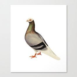 Le Pigeon Canvas Print