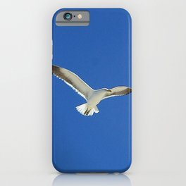 Seagull over the Helderberg iPhone Case