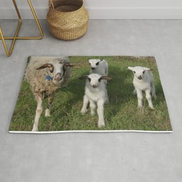 Ewe and Three Lambs Making Eye Contact Rug