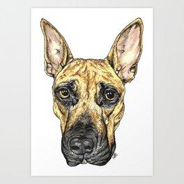 German Shepherd Mix Art Print