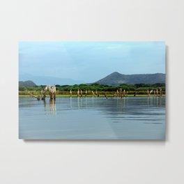 Dead Trees Driftwood Omo River Landscape, Ethiopia Metal Print