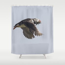 Atlantic puffin in flight with her sand eels Shower Curtain