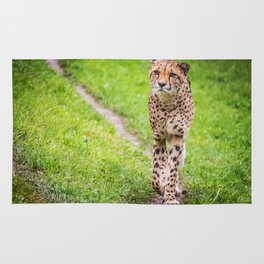Cheetah at nature Rug