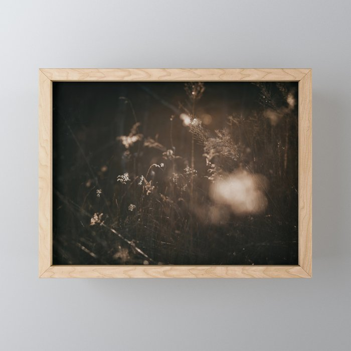 Sunlight and Nature   Nature and Landscape Photography Framed Mini Art Print