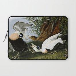 Eider Duck (Somateria mollissima) Laptop Sleeve