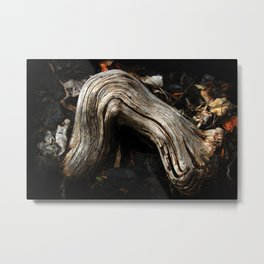 Decay and New Life Metal Print