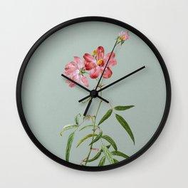 Vintage Peach Leaved Rose Botanical Illustration on Mint Green Wall Clock