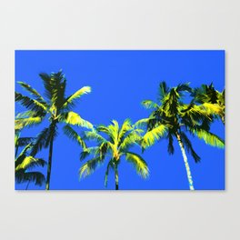 Palm Trees and Summer days Canvas Print