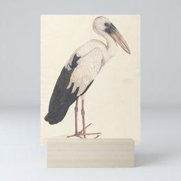Asian Openbill Stork  Mini Art Print