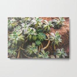 Botanical Gardens - Succulent #882 Metal Print