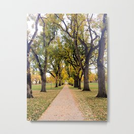 Colorado State University fall Colors at the Oval Metal Print