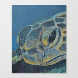 Hawksbill Canvas Print