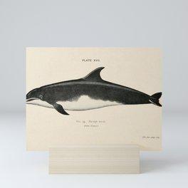 W Sidney Berridge - A Book of Whales (1900) - Figure 35: Common Bottlenose Dolphin Mini Art Print
