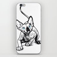 sphynx iPhone & iPod Skins featuring Sphynx by Sara (aka Wisney)