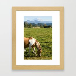 Paint Horse and Mount Rainier Framed Art Print