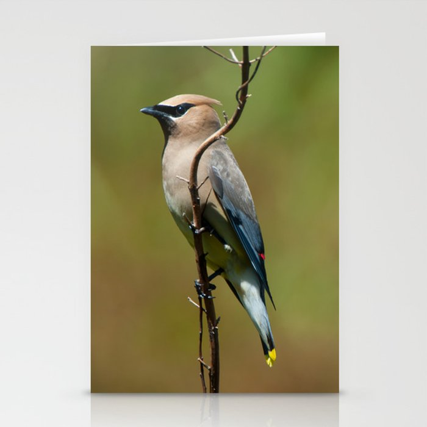 Cedar Waxwing Portrait Stationery Cards