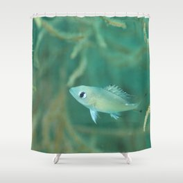 Curious & gentle little fish Shower Curtain