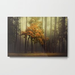 The Dark Woods Adorned Metal Print