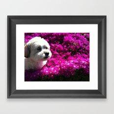 Spring Puppy Framed Art Print