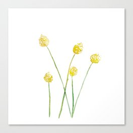 Yellow Billy Button Flowers Canvas Print