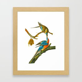 Passenger Pigeon Framed Art Print